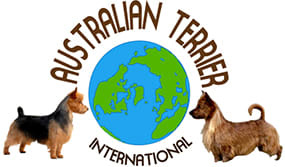 Australian Terrier international